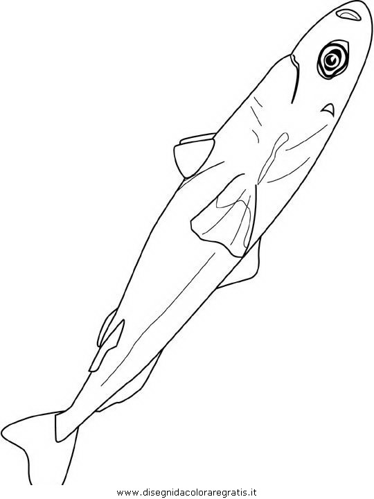 animali/pesci2/pesce_pesci_036.JPG