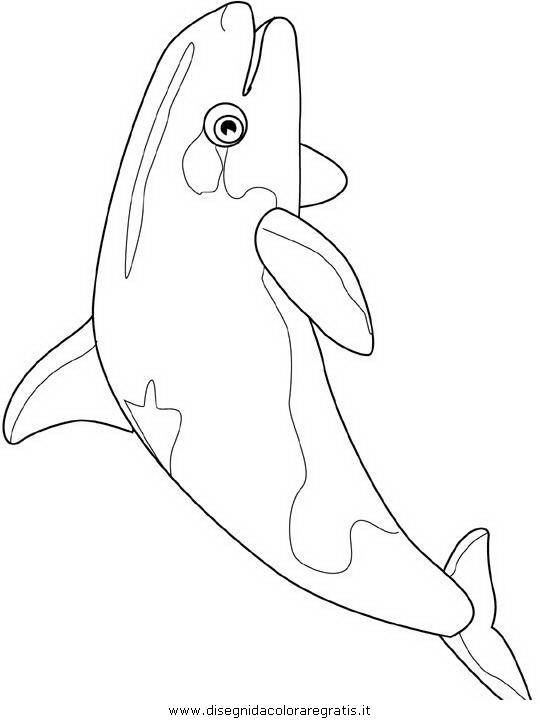 animali/pesci2/pesce_pesci_042.JPG