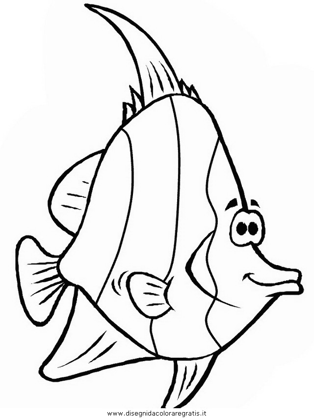 animali/pesci2/pesce_pesci_048.JPG