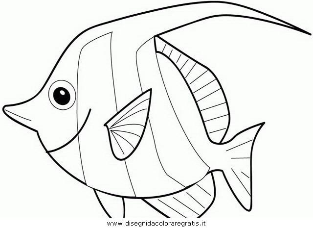 animali/pesci2/pesce_pesci_066.JPG