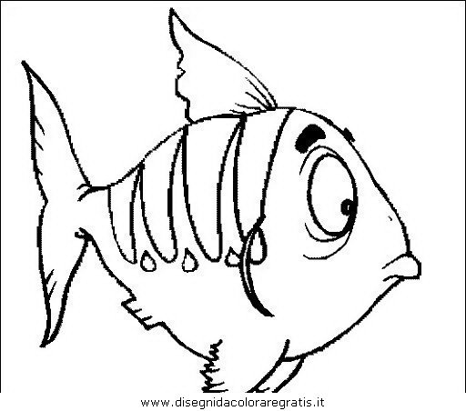 animali/pesci2/pesce_pesci_080.JPG