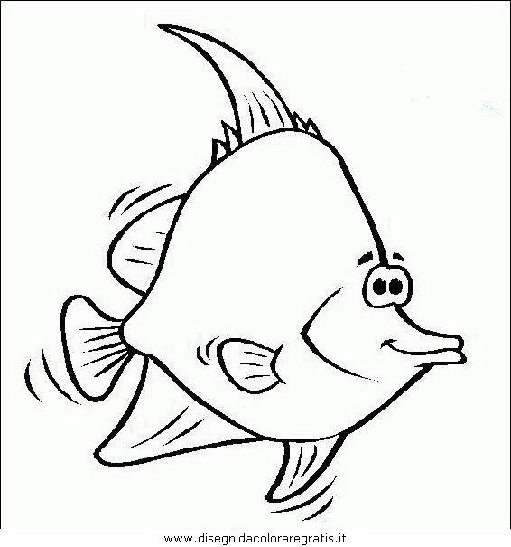animali/pesci2/pesce_pesci_081.JPG