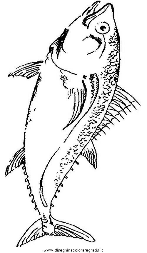 animali/pesci2/pesce_pesci_115.JPG