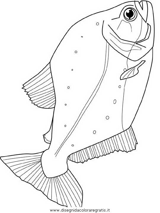 animali/pesci2/pesce_pesci_119.JPG