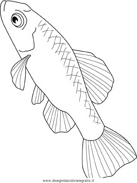 animali/pesci2/pesce_pesci_129.JPG