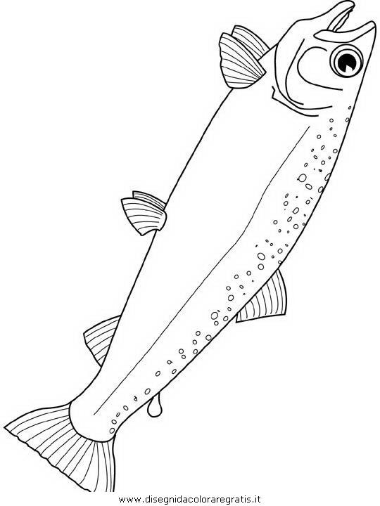 animali/pesci2/pesce_pesci_132.JPG