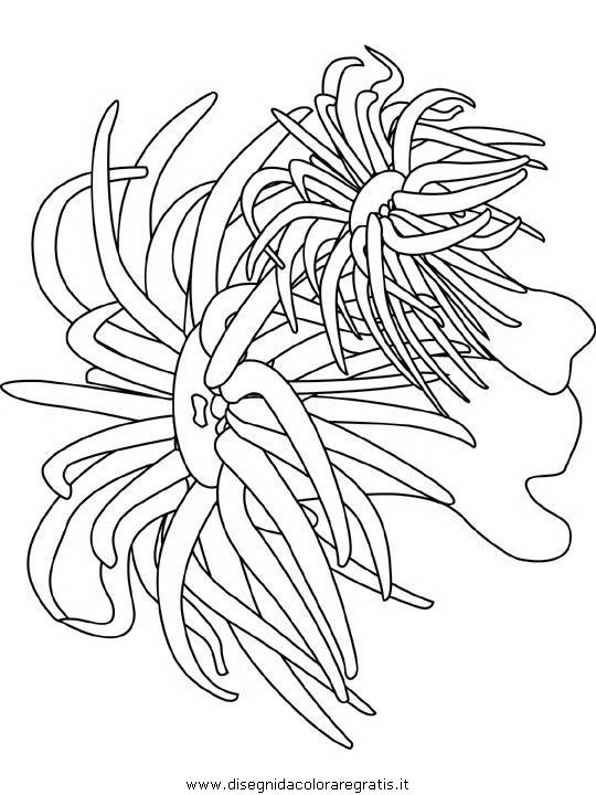 Disegno Pesce Pesci 133 Animali Da Colorare