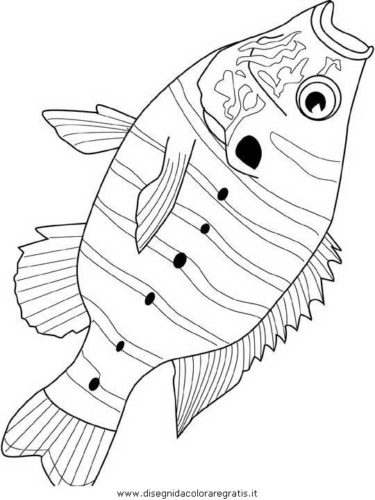 animali/pesci2/pesce_pesci_144.JPG