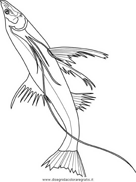 animali/pesci2/pesce_pesci_147.JPG