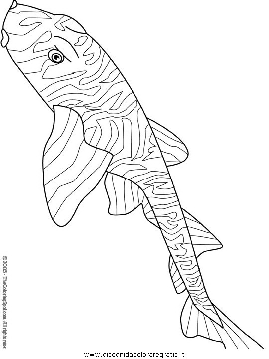 animali/pesci2/pesce_pesci_150.JPG