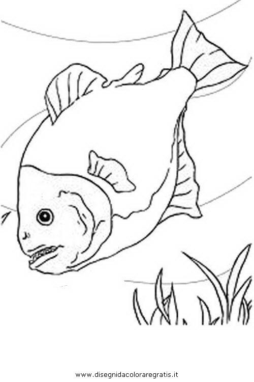 animali/pesci2/piranha.JPG