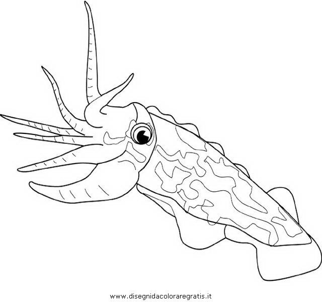 animali/pesci2/seppia2.JPG