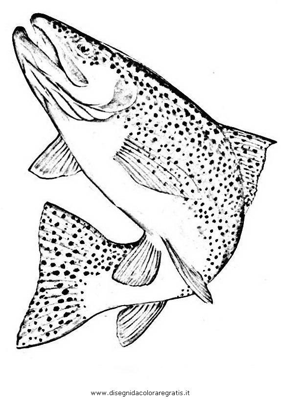 Disegno trota 05 animali da colorare for Pesci da stampare e colorare