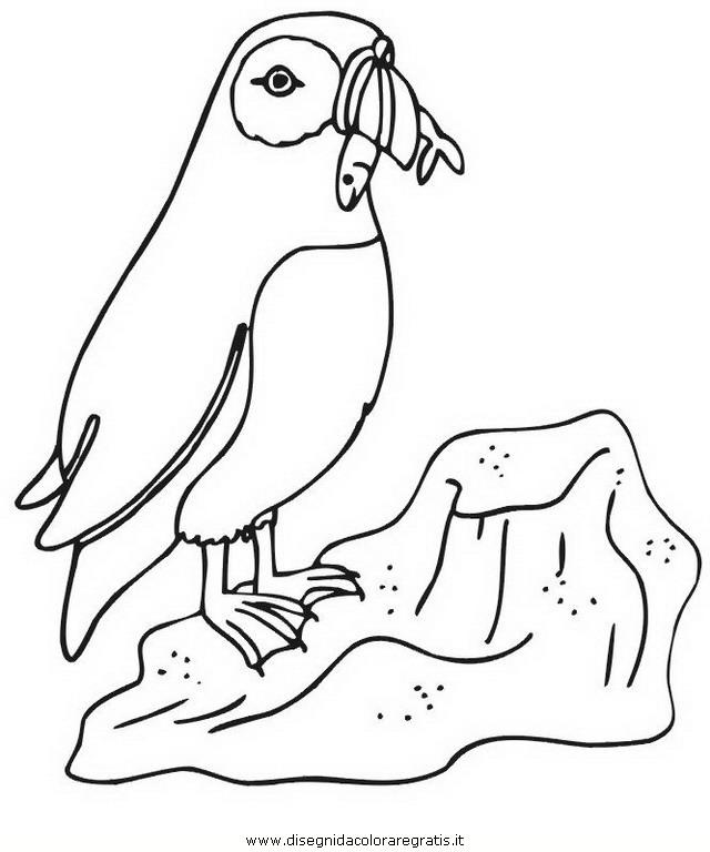 animali/pinguini/pinguino_18.jpg