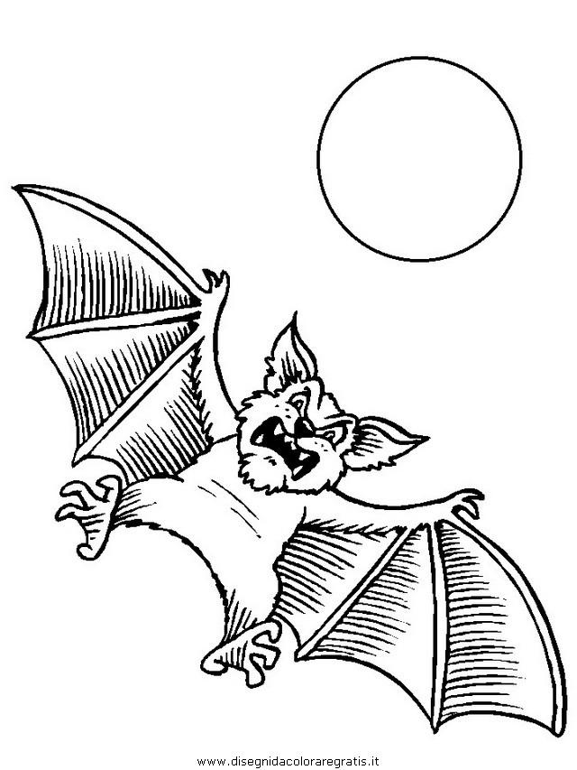 animali/pipistrelli/pipistrello_01.JPG