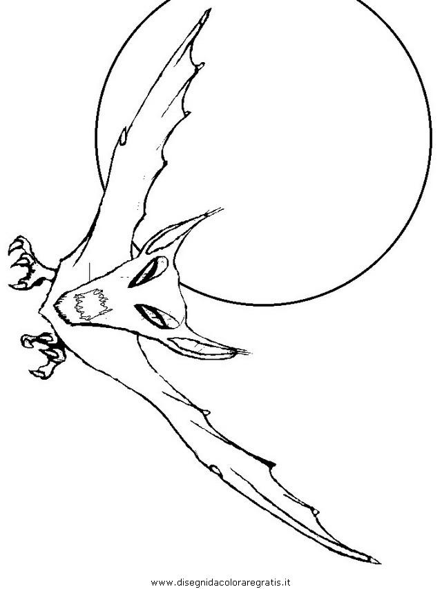 animali/pipistrelli/pipistrello_02.JPG