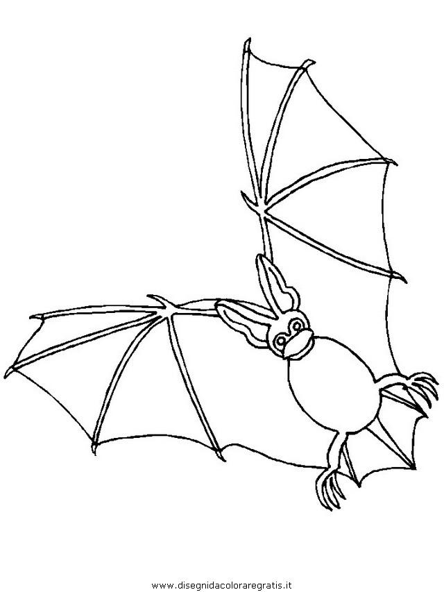 animali/pipistrelli/pipistrello_03.JPG
