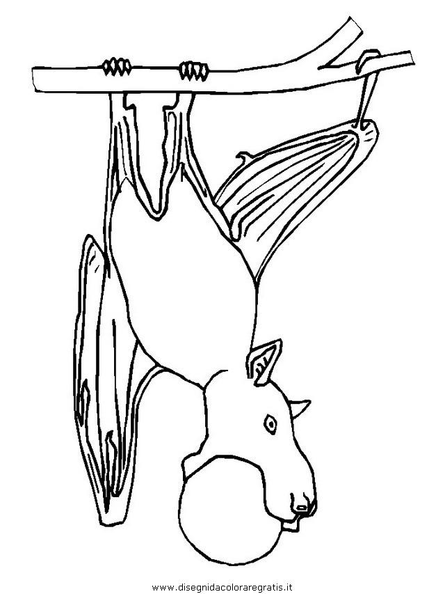 animali/pipistrelli/pipistrello_04.JPG