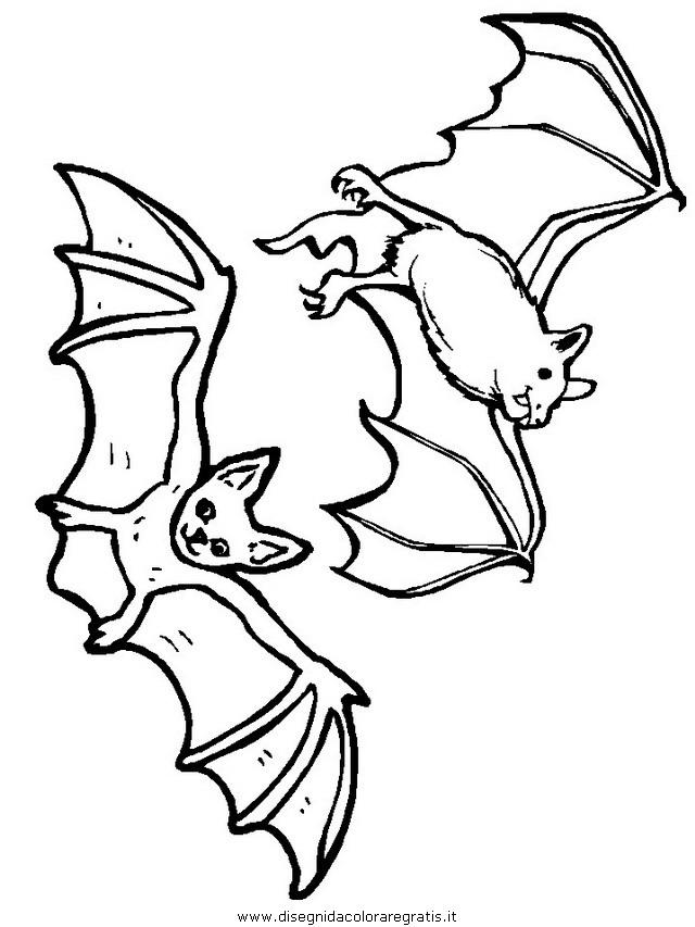 animali/pipistrelli/pipistrello_09.JPG