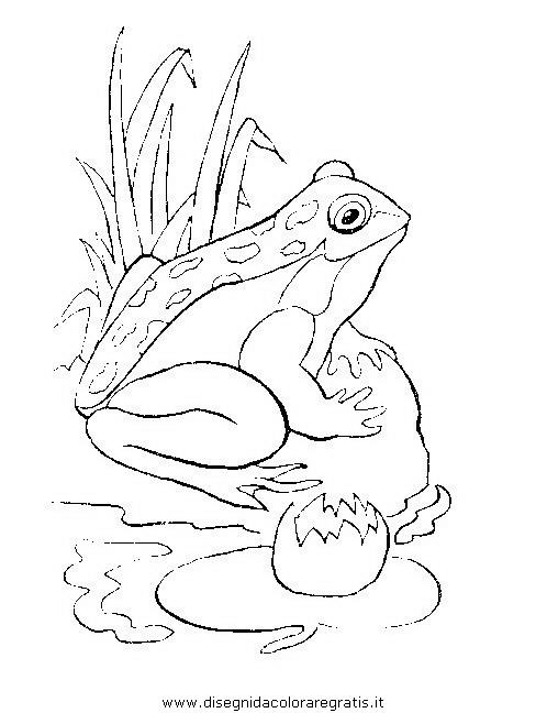 Disegno Ranarane10 Animali Da Colorare