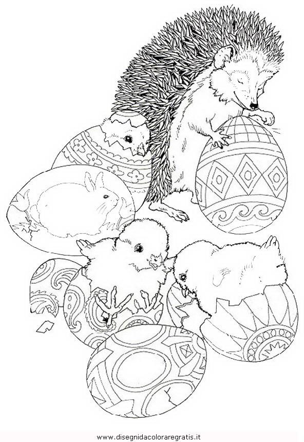 animali/ricci/riccio_36.JPG