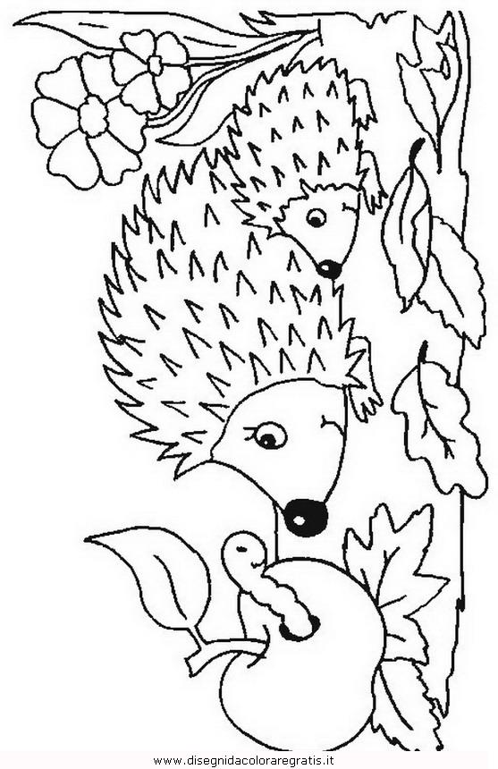 animali/ricci/riccio_50.JPG