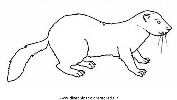 animali/roditori/furetto_furetti_1.JPG
