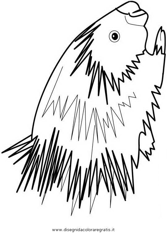 animali/roditori/istrice_porcospino_10.JPG