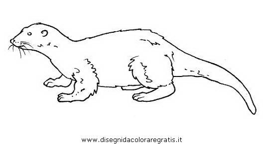 animali/roditori/lontra_2.JPG