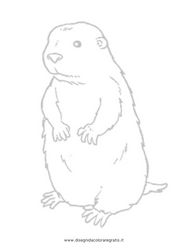 animali/roditori/marmotta-2.JPG