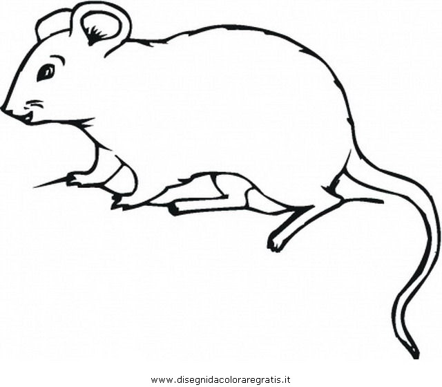 An Opossum Colouring Pages Sketch Coloring Page Opossum Coloring Page