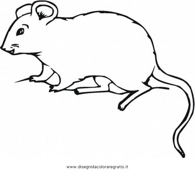 animali/roditori/opossum_2.JPG