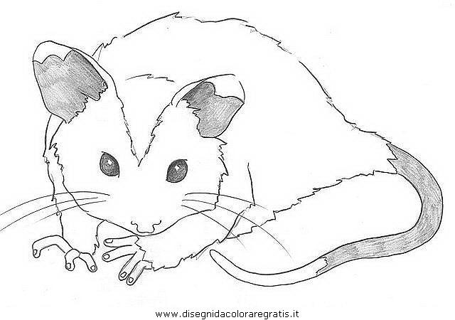 animali/roditori/opossum_3.JPG