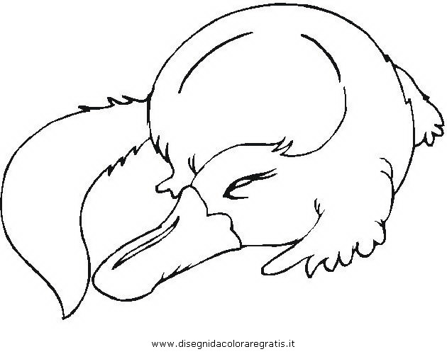 animali/roditori/ornitorinco_platypus_02.JPG