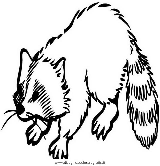 animali/roditori/procione_procioni_13.JPG