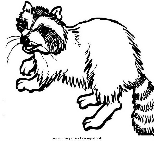 animali/roditori/procione_procioni_18.JPG