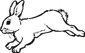 animali/roditori/roditori_01.JPG