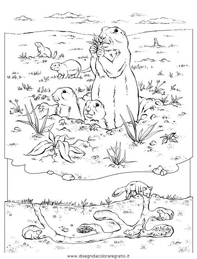 animali/roditori/roditori_129.JPG