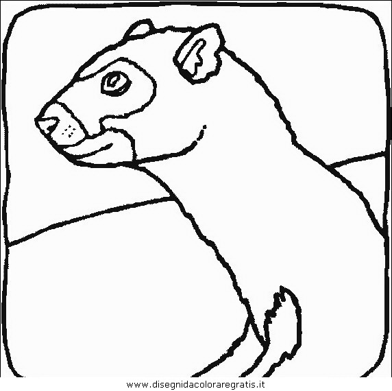 animali/roditori/roditori_88.JPG