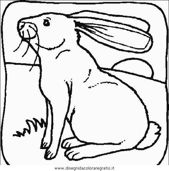animali/roditori/roditori_94.JPG