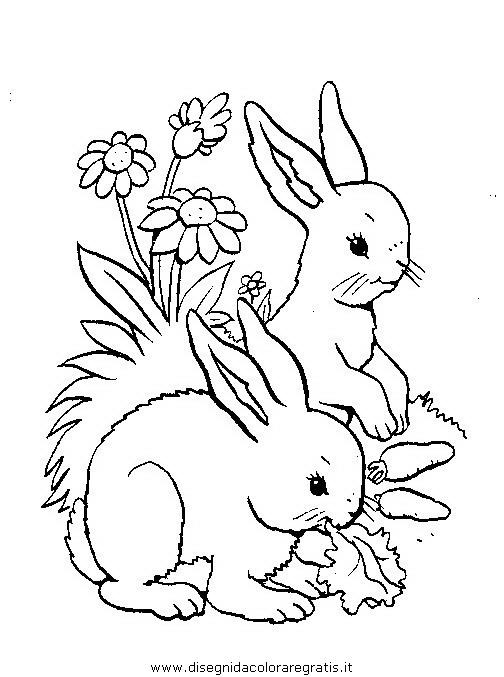 animali/roditori/roditori_99.JPG