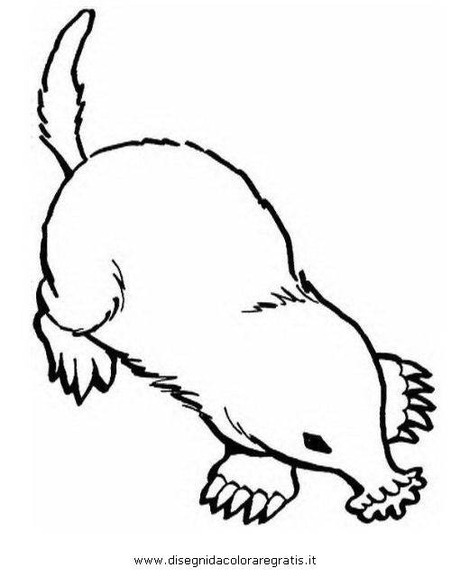 animali/roditori/talpa_05.JPG