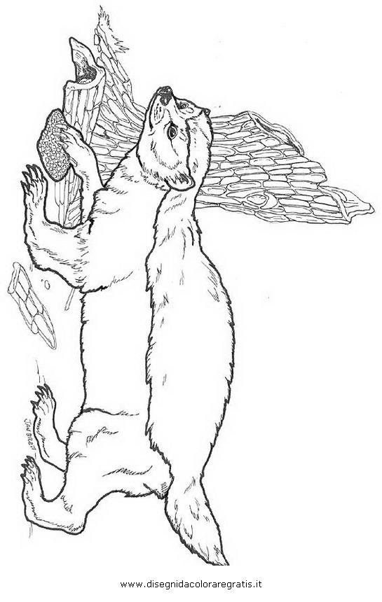 animali/roditori/tasso_tassi_badger_01.JPG