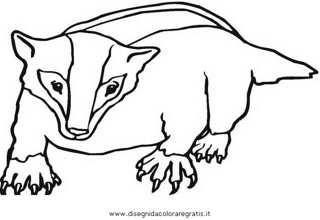 badger coloring page - disegno tasso tassi badger 02 animali da colorare