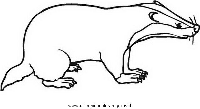 animali/roditori/tasso_tassi_badger_03.JPG