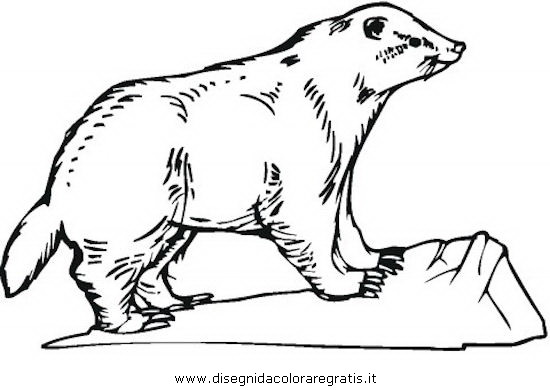 animali/roditori/tasso_tassi_badger_06.JPG