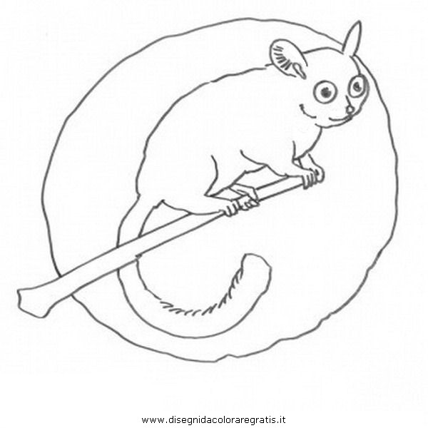 animali/scimmie/lemure_8.JPG