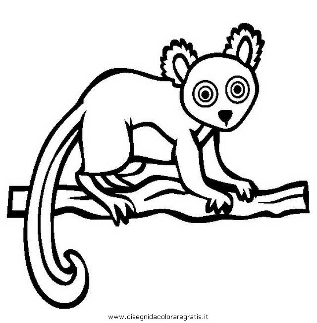 animali/scimmie/lemure_9.JPG