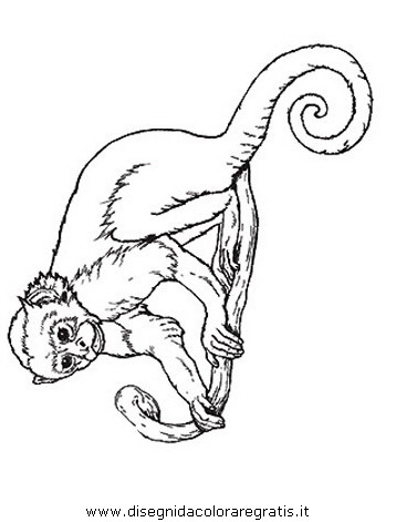 animali/scimmie/scimmia_16.JPG