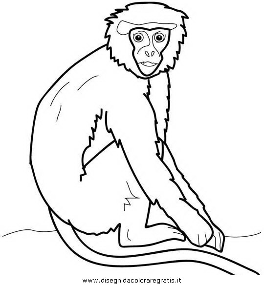 animali/scimmie/scimmia_18.JPG